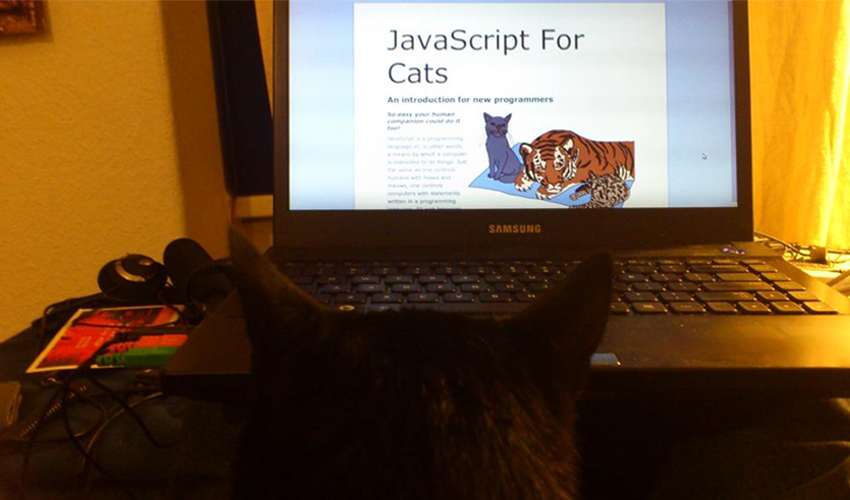 Learning JavaScript for Cats